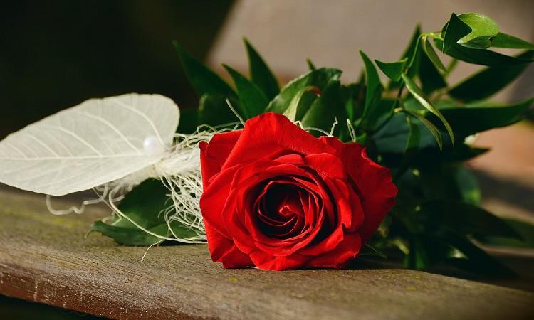 婚活相手に誕生日プレゼントを渡したい!おすすめをご紹介